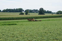 2013-08-10 Amish Country-5228